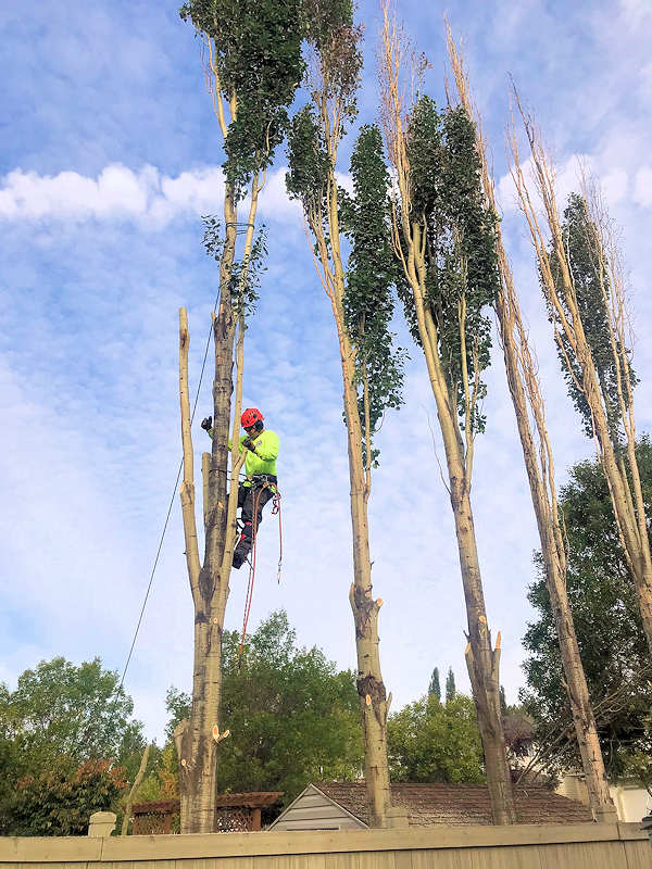 capital city tree service trunk removal
