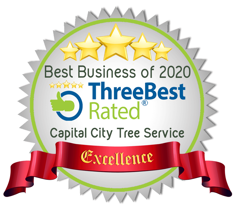 voted top 3 tree service st albert 2020