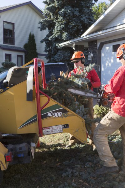 edmonton tree chipping