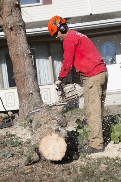 edmonton stump removal