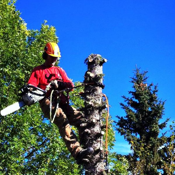 capital city tree removal